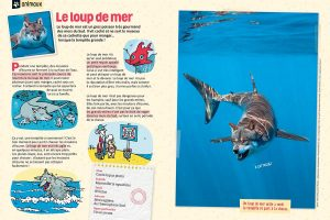 """Le loup de mer"", Astrapi n°945, 1er avril 2020Texte : Rémi Chaurand. Photos : Adobestock. Illustrations : Perceval Barrier."
