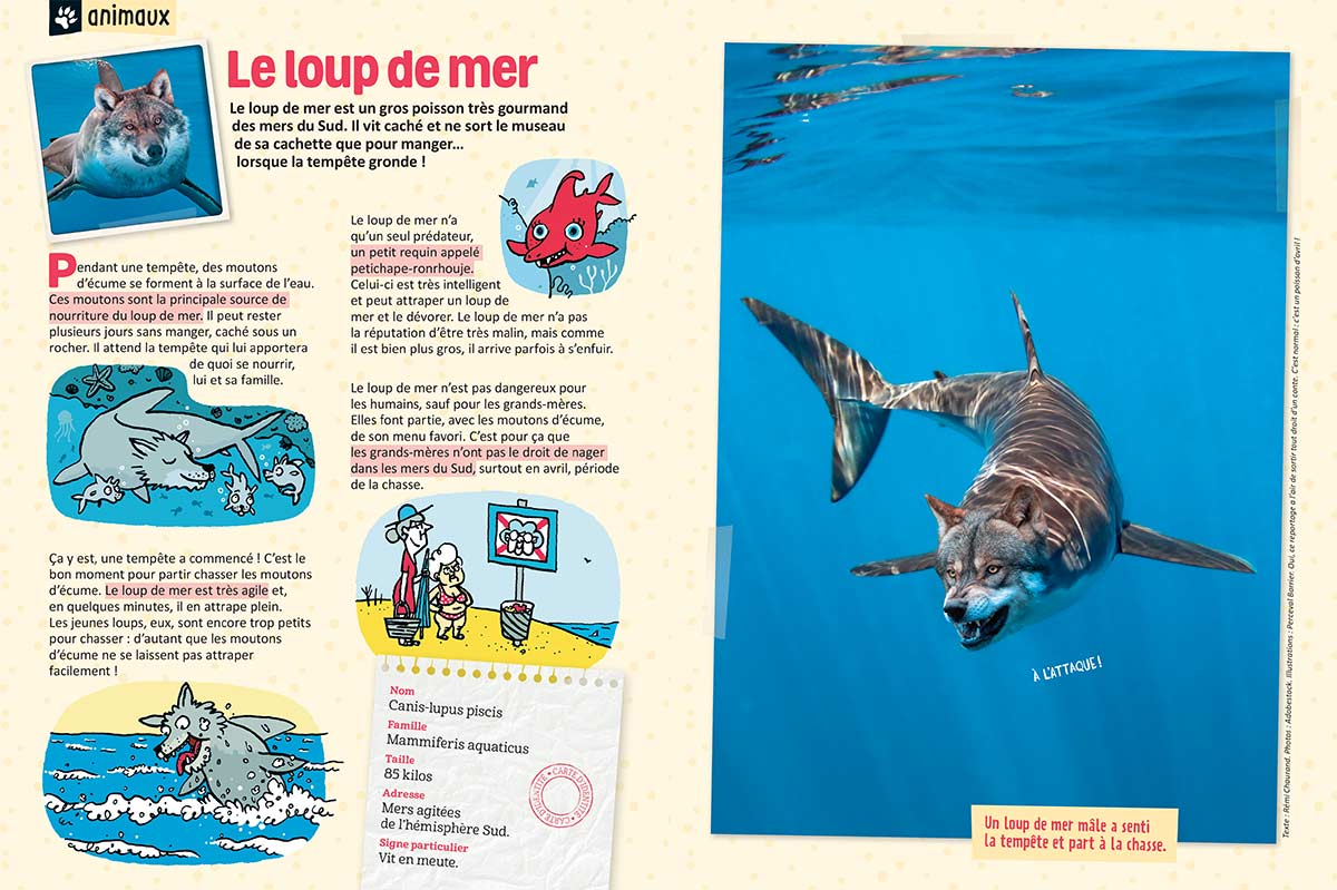 """Le loup de mer"", Astrapi n°945, 1er avril 2020Texte : Rémi Chaurand. Photos : Adobestock. Illustrations : Perceval Barrier."